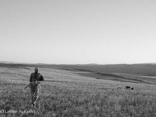 Hunter, dogs, prairie