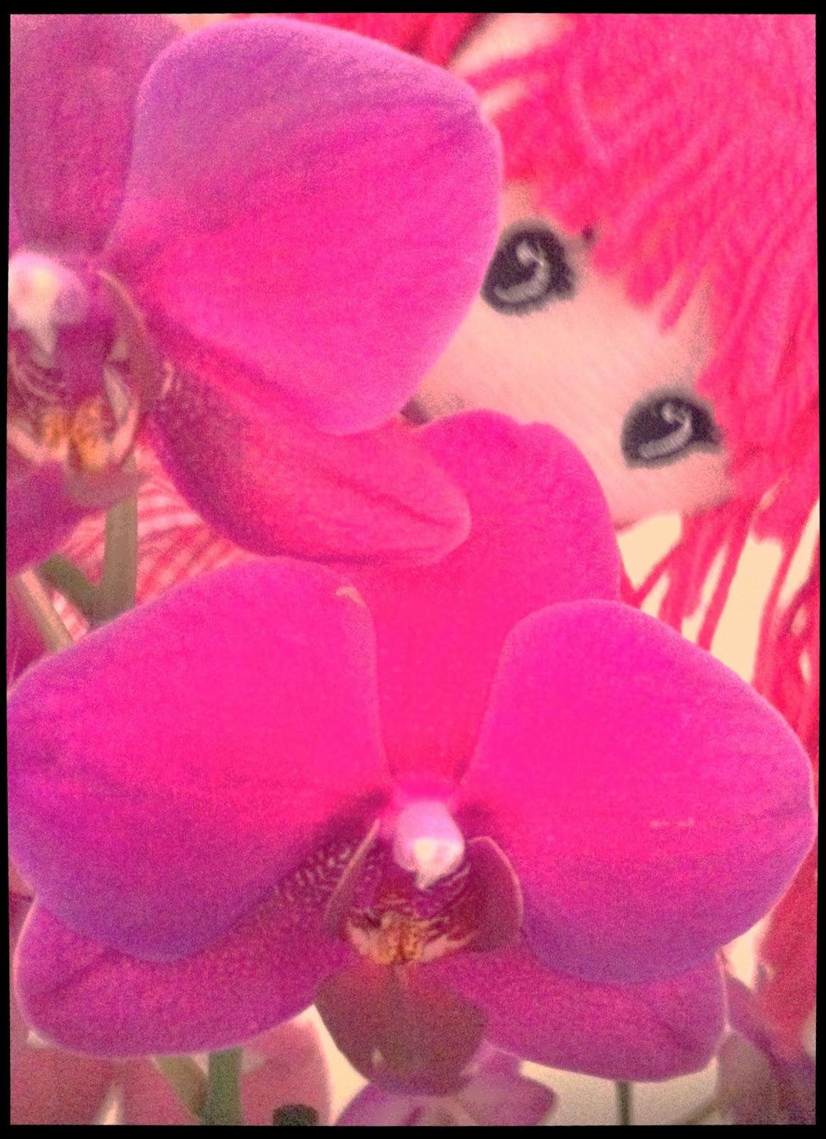 Fotos de flores y rosas para fondo de pantalla del celular y