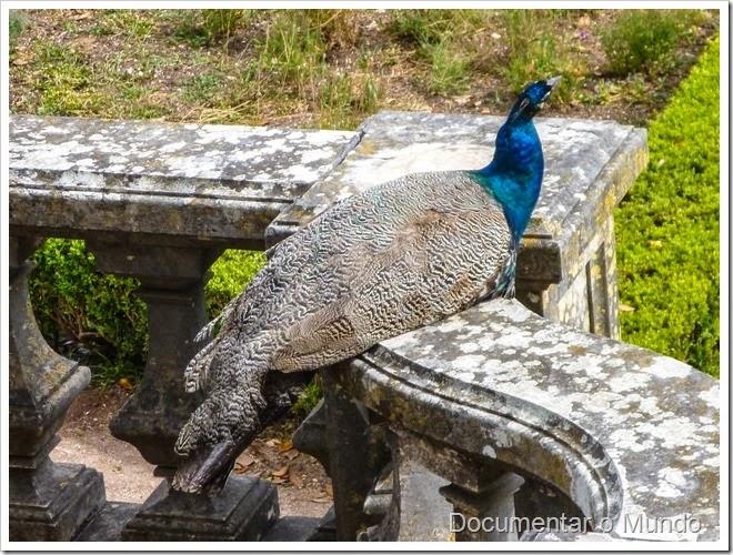 Pavão; Jardim Botânico da Ajuda; Ajuda; Lisboa