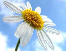 Fiore preferito