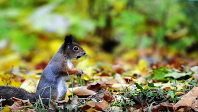 This cute squirrels can destroy the Christmas spirit
