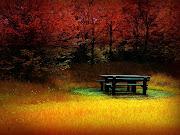 Bonito bosque en la época de otoño. Fondo de pantalla de una banca en medio . bonito bosque en la ã©poca de otoã±o