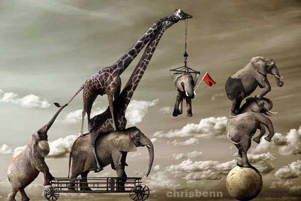 15-Elephant-Acrobats-Chris-Bennett-Animal-Photographs-of-Surreal-Art-www-designstack-co