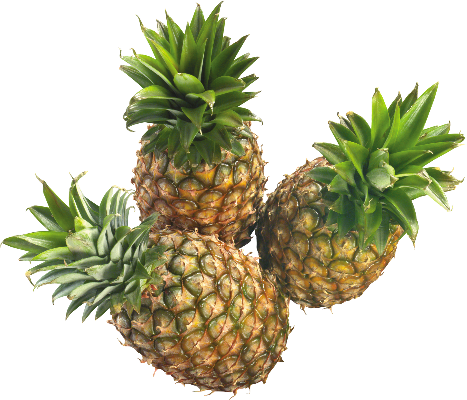 Ananas resimleri for Photographs for sale online