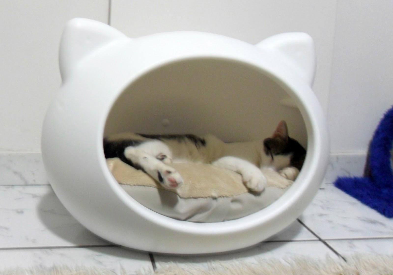 Como podria construir esta casa para gato subdivx - Casa para gato ...