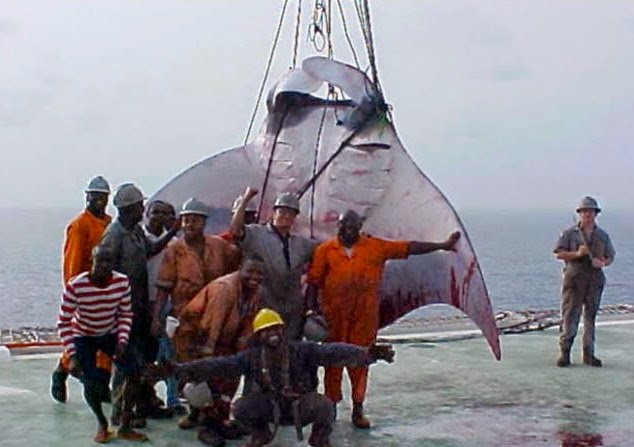 Authorities take a photo with giant manta ray!