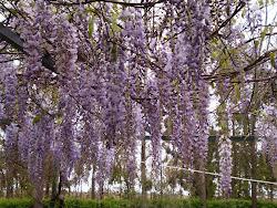 Primavera ¡Primavera!