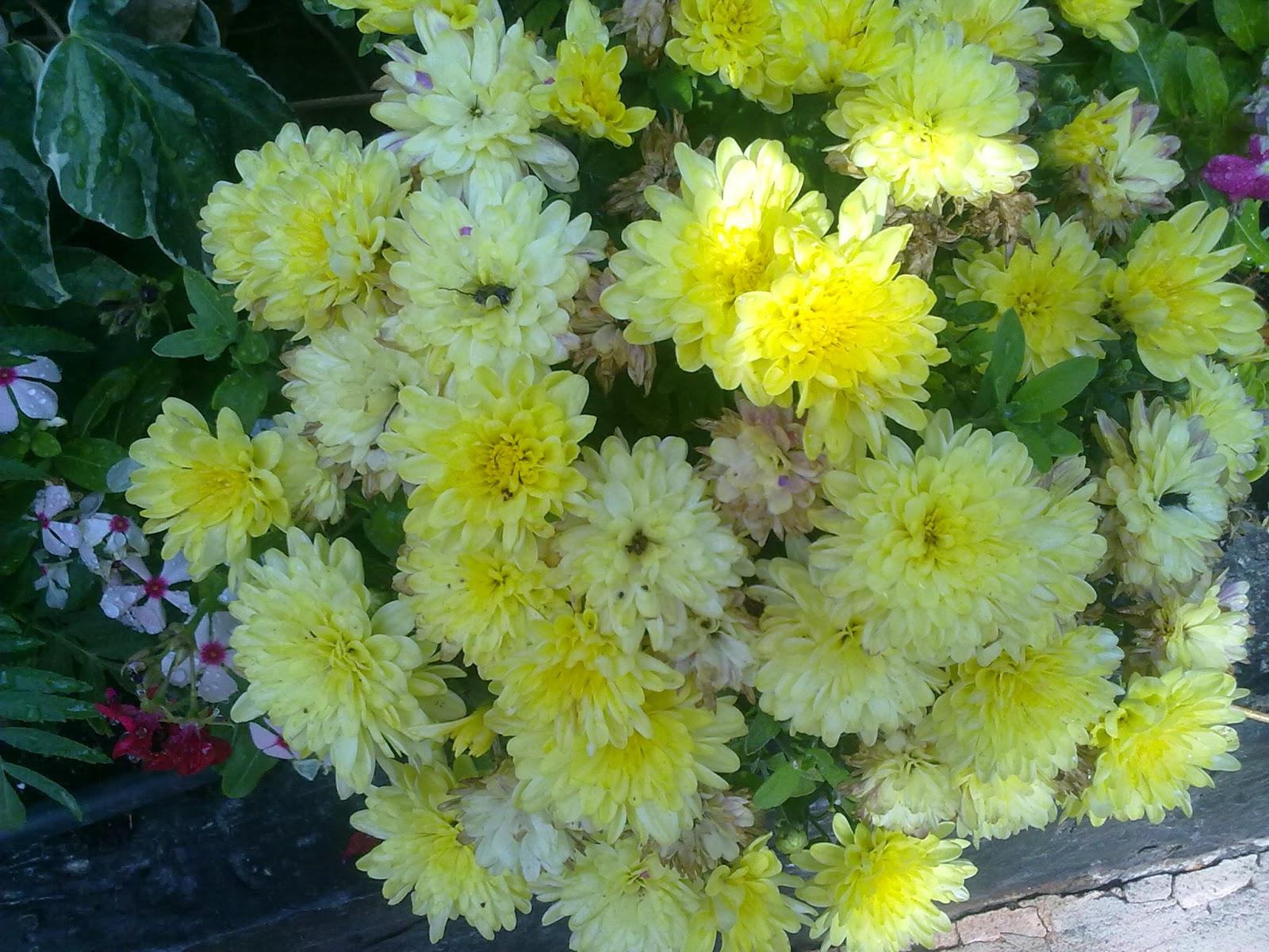 La superstición de las plantas | Entre patios y plantas
