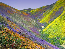 Wildflowers on the Grapevine