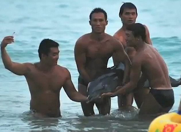 Dolphin 'dies after China tourist abuse'