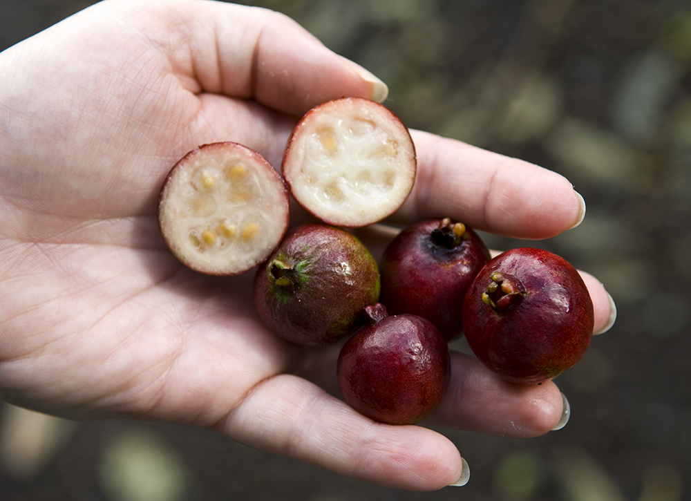 The 3 Foragers: Foraging for Wild, Natural, Organic Food ...