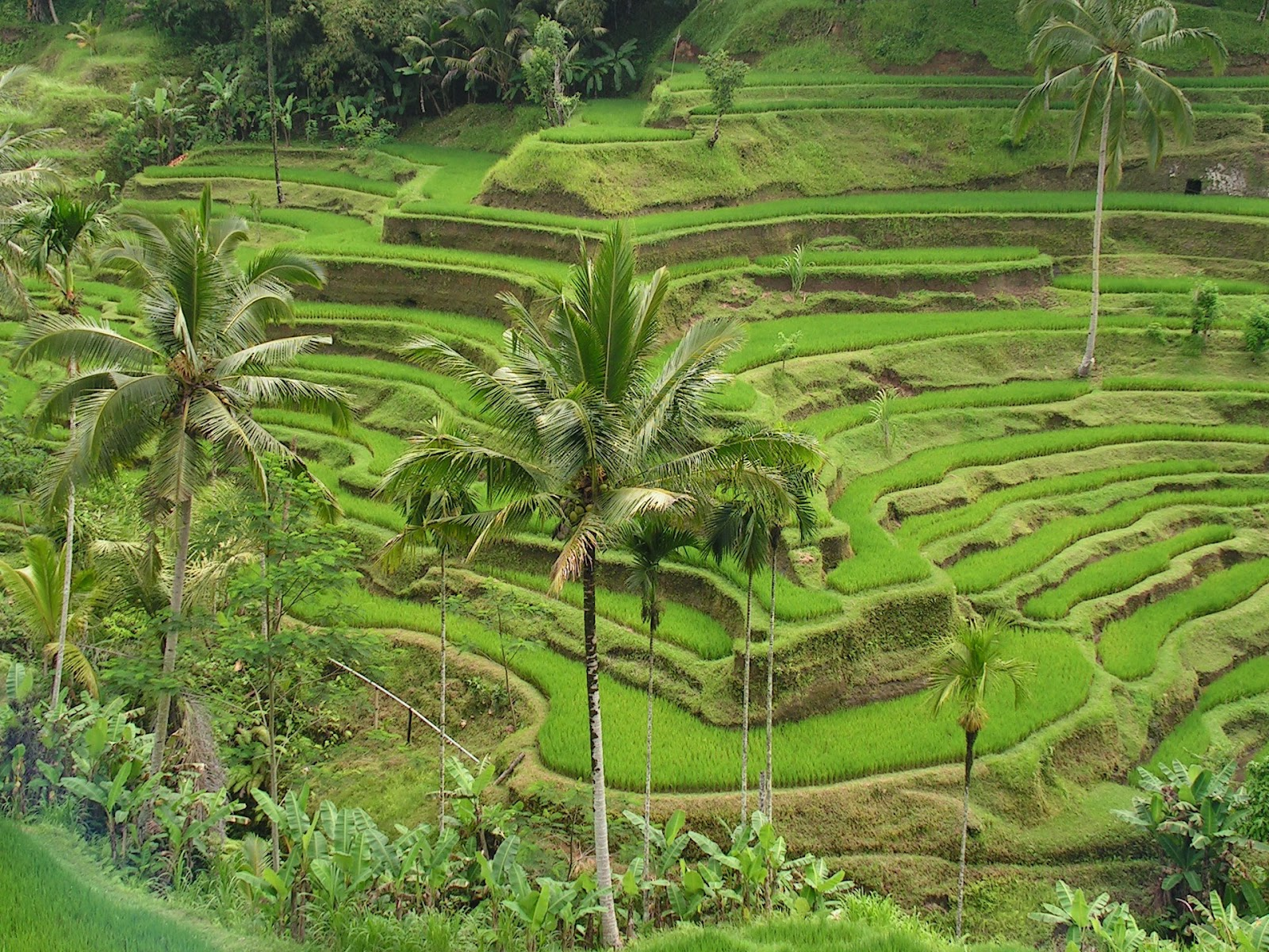 Cultural Landscape Of Bali Province Traveling Tour Guide