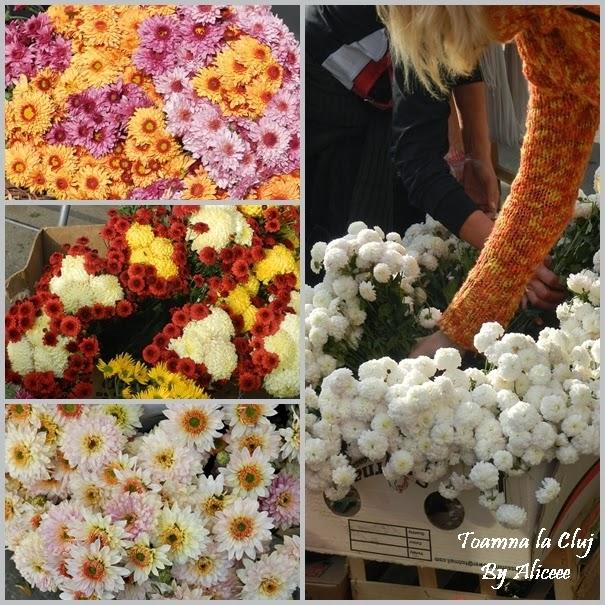toamna-la-cluj-crizanteme