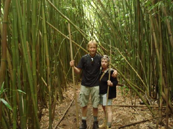 Bamboo Forest Maui6