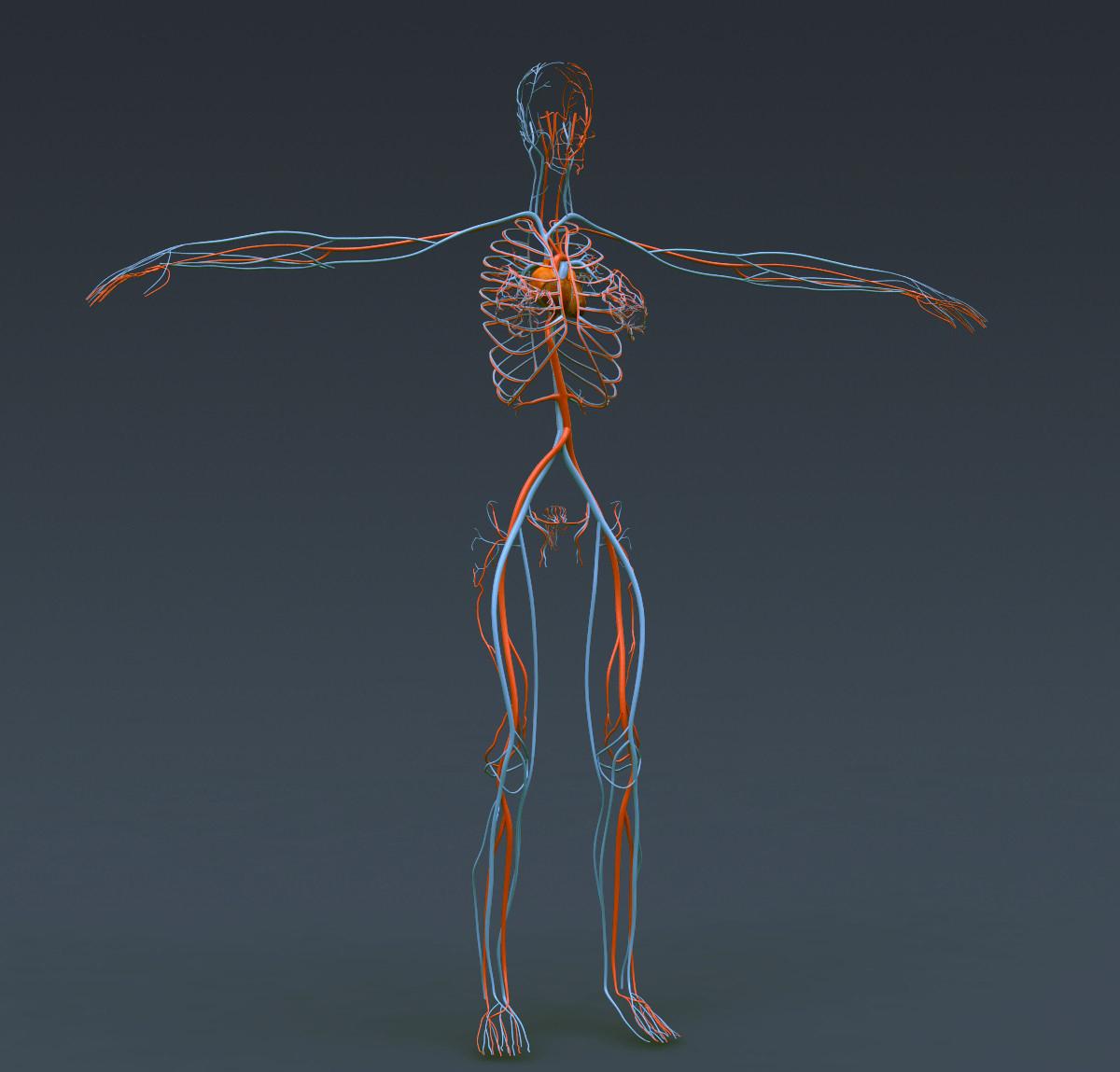 Female anatomy live model 2493675 - togelmaya.info