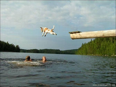 funny_picture_dog_jump