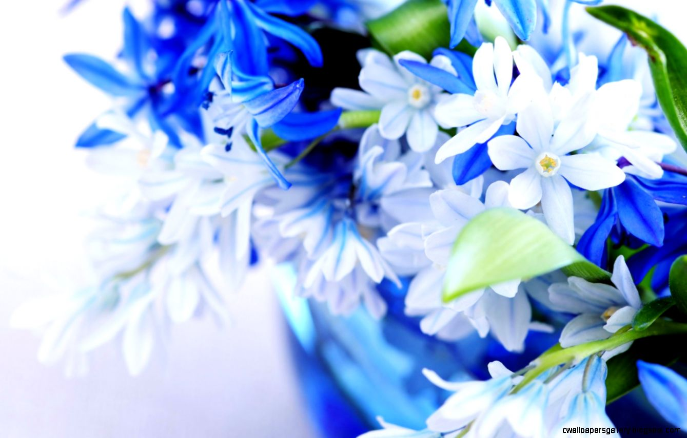 Blue Flowers Wallpaper   WallpaperSafari