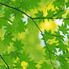 Gambar-gambar daun kualitas tinggi