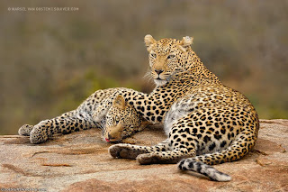 6. Mother & Son by Marsel van Oosten