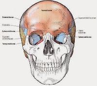 skull radiography