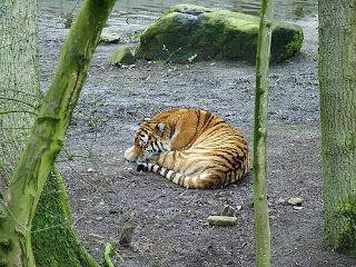 ملف كامل عن اجمل واروع الصور للحيوانات  المفترسة   حيوانات الغابة  9567191_a3c8ae8659