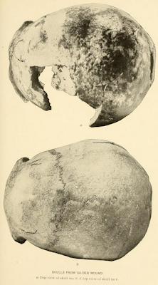skulls of Nebraska loess man