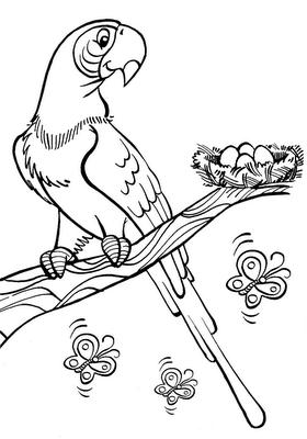 desenhos online para colorir e imprimir arara e borboletas para pintar