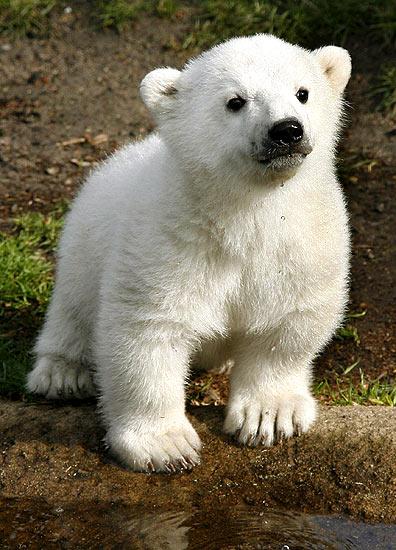 Animales, Polares Imágenes gratis en Pixabay - imagenes de animales polares