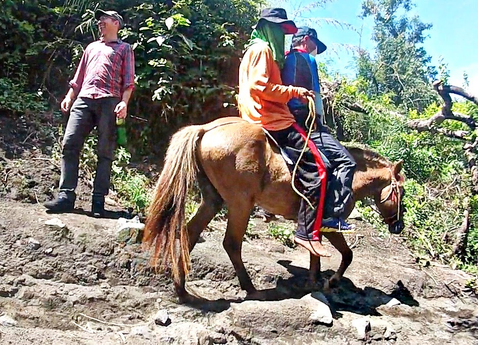 Horse Hire Taal Volcano
