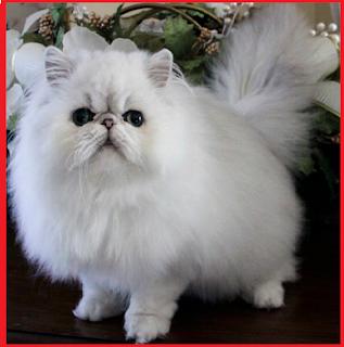 Penyebab utama bulu rontok pada kucing