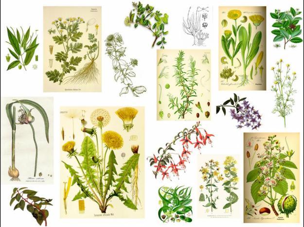 El Mundo De Las Plantas Clasificacion De Las Plantas Por