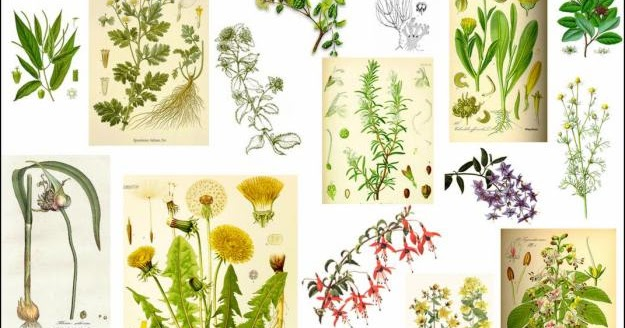 El mundo de las plantas clasificacion de las plantas por for Plantas ornamentales y medicinales