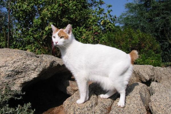 Gatinhos Bosques da Noruega para venda - animais.jcle.pt