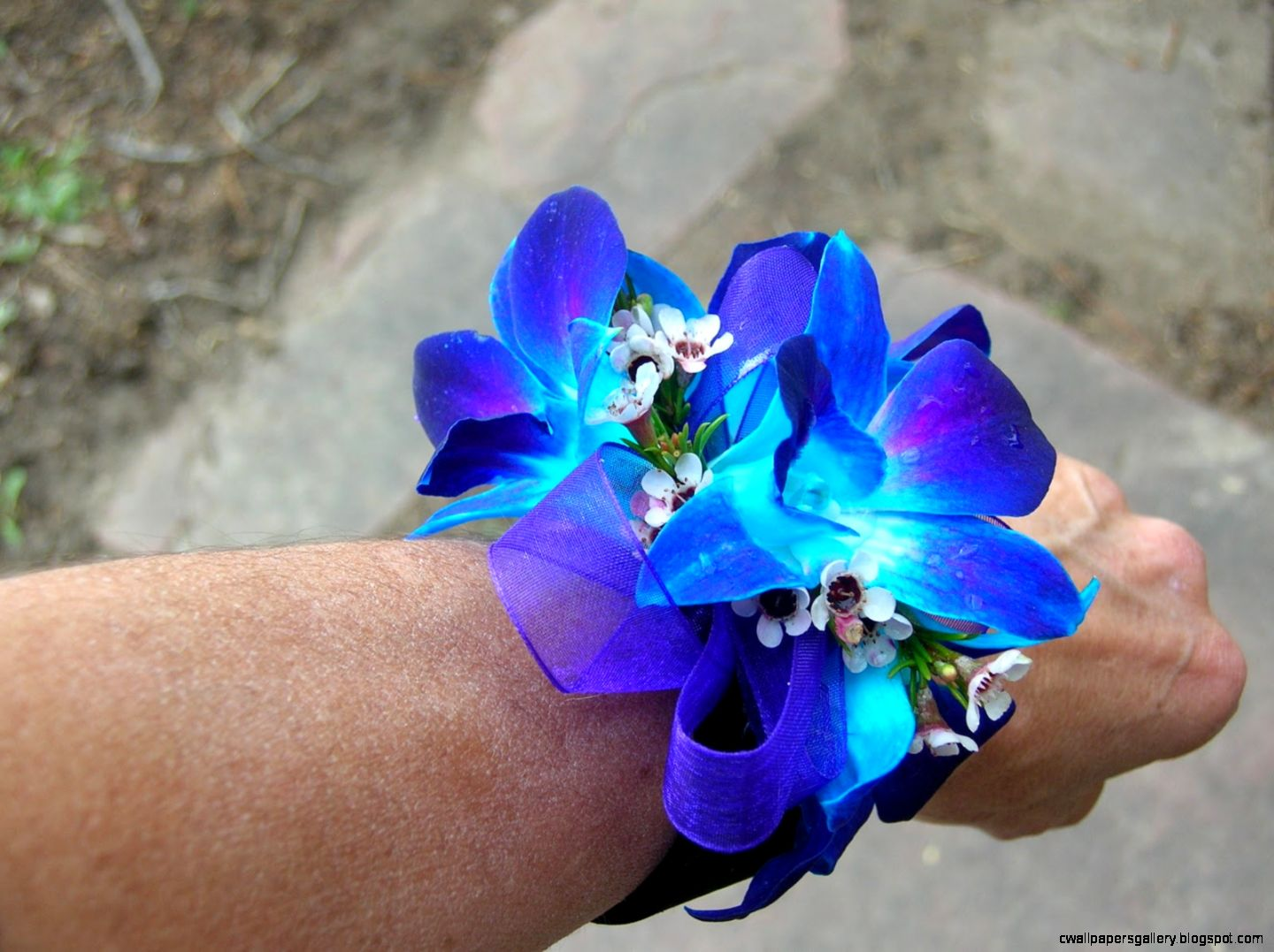 1000 images about corsages on Pinterest  Wrist Corsage Prom
