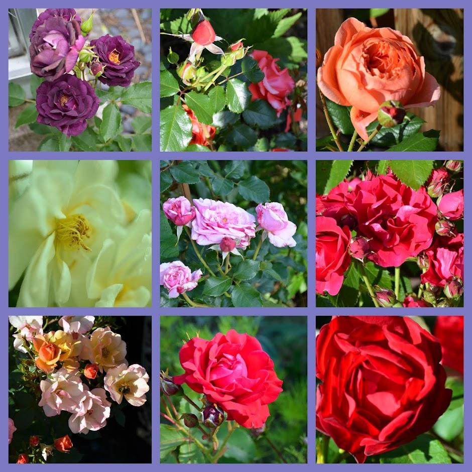 Kom ljuva krusmynta, kom rosor och akveleja