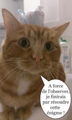 Lionel, chat roux de l'école du chat libre.