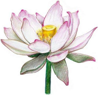 Fant stico mundo da pri lotus tattoo - Comment dessiner une fleur de lotus ...