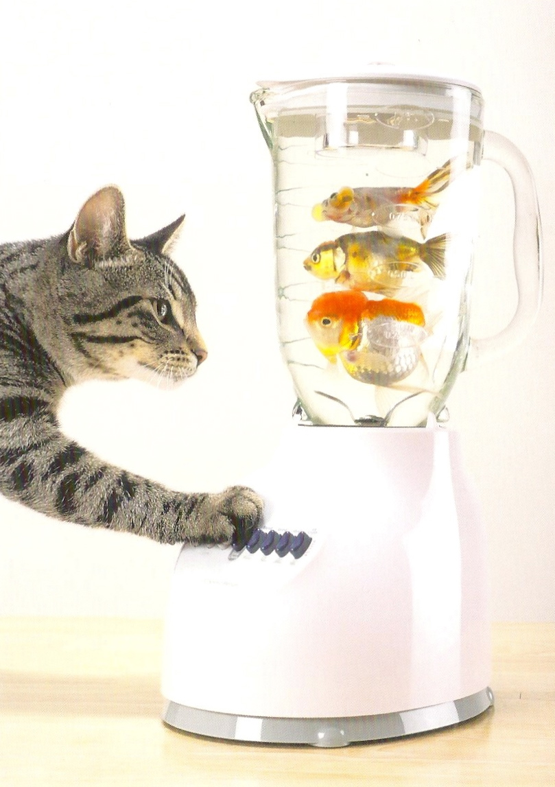 Kitty In A Blender ~ My favorite animal postcards a cat with fish in blender