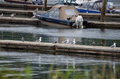 gulls on docks in harbor