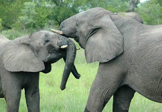 http://sudafrica.pordescubrir.com/la-reserva-de-mala-mala.html