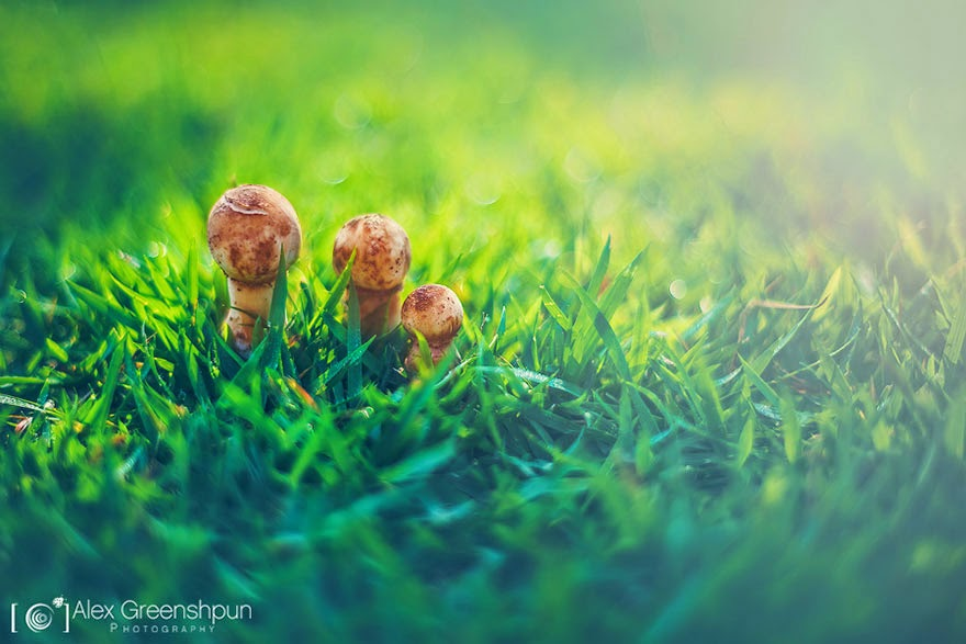 Mushrooms in the fresh grass