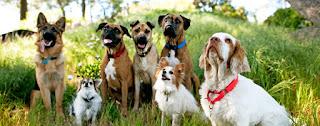 Life Springs Therapeutic Pet Friendly Drug Rehab (800) 746-0937
