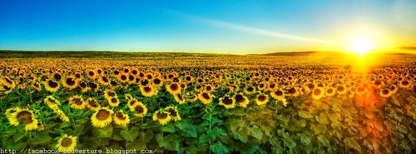 Couverture facebook avec fleur de soleil