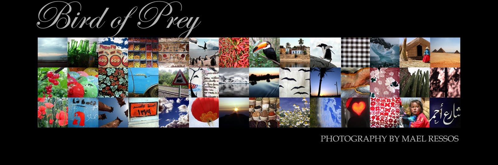 Bird of Prey Photography