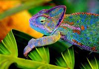 lingua - Lingua de camaleão inspira design robótico  018_chameleon