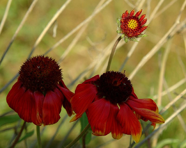 flores no jardim poema ? Doitri.com