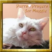 PURRS FOR MAGGIE