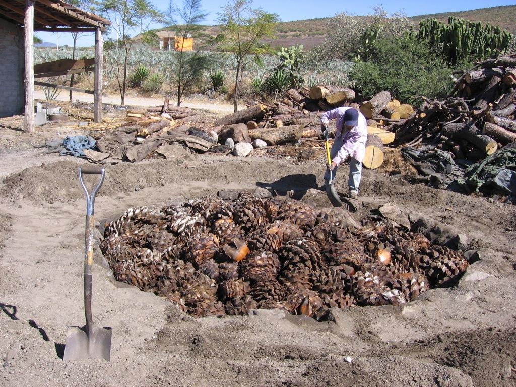 Historia cultura y comida chilena curanto la receta for Como cocinar carne de chivo