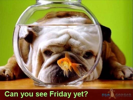 http://3.bp.blogspot.com/-d2YZX3y4M7Q/UAfIjSN0BzI/AAAAAAAAF6A/bjroSMe6PEI/s1600/Funny-Animals-Can-you-see-Friday-yet.jpg