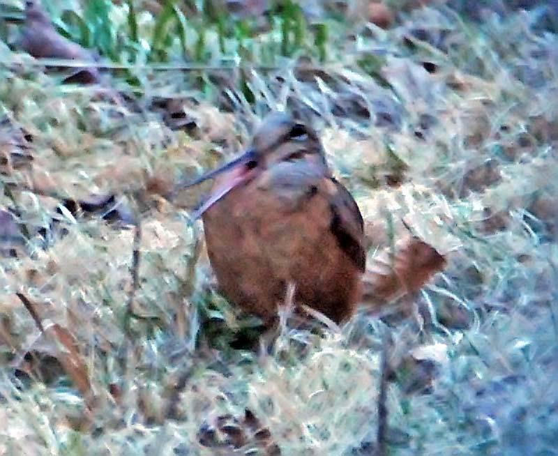 ¿Cuáles son las verdaderas aves de la primavera? - KPCNews: Kpcnews